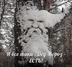 Tetkam.net - Капкан для Деда Мороза