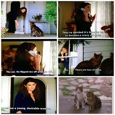 They know. The cats know..I'm alone.  I guess I need to start collecting newspapers and magazines, find a blue bathrobe, lose my front teeth. I need to find some yarn balls--Crazy cat lady & (future) spinster Lorelai Gilmore | Gilmore girls (s4 ep20)