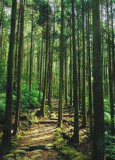 The manmade path in the forest | Hanson Mao