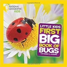 Insect Activities and Nonfiction Texts for Primary Students