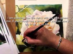 How To Paint A Rose Adding The Background Watercolor Dvd Video
