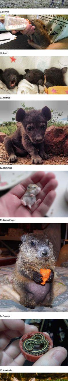 Really Cute Baby Animals