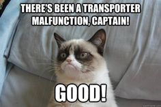 Grumpy Cat - theres been a transporter malfunction captain good