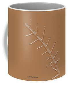 Abstract Branch Coffee Mug featuring the photograph Abstract Branch Winter Net Leaf Hackberry Tree by Tom Janca