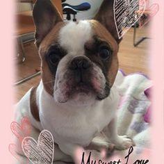 Love Coco my bulldog