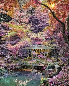"Nature Fervor (@theearthfervor) on Instagram: ""Taking a look through Rikugien, Tokio. Photo by @golden_heart"""