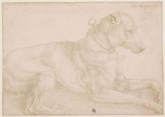 Albrecht Dürer , A Dog Resting, 1520, silverpoint over traces of carbon black on prepared paper, On loan from The British Museum, London © The Trustees of The British Museum, London