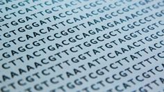 """DNA-based Data Storage: Researchers at Harvard University encoded 5.2 million bits of digital data in strings of DNA. Study released 1/23/2013 in Nature. Encoded a color photo, part of the """"I Have a Dream"""" speech, and all 154 of Shakespeare's known sonnets."""