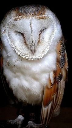 Barn owl one of Jehovah's amazing CREATIONS!!!                                                                                                                                                                                 Mehr