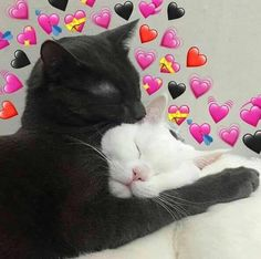 Tú y yo así, no sé, piénsalo. Cute Cat Memes, Cute Love Memes, Funny Memes, Kittens Cutest, Cute Cats, Funny Cats, Baby Animals, Funny Animals, Cute Animals