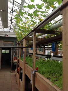 Aquaponics Every old folks home should have one