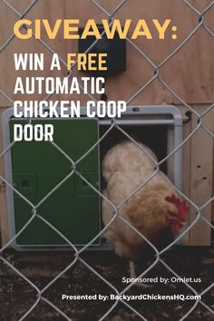 Win A FREE Automatic Chicken Coop Door By Omlet. **Giveaway valid for US/UK/IE/AUS** #Giveaway #AutomaticChickenCoopDoor #BackyardChickens