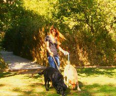 Dog walking Bugas e Mel irmãos labrador