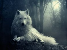Wolf Pictures | White Wolf | The Written Word