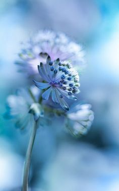 Photograph feelling blue by Irena Szklarzewska on 500px