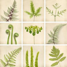 8x8 Fern Art Set Botanical Prints Nature by RockyTopPrintShop,