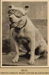 """pit bulls and wwii 