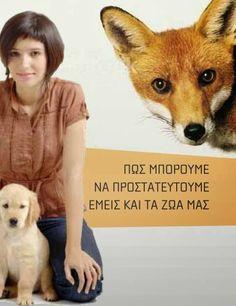 ΣΕΚ Αλεξάνδρειας: Πληροφορίες για τη λύσσα