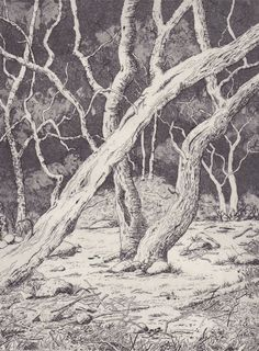 weald 2012 by Stephanie Rampton etching and aquatint