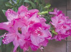 108th Rhododendron Festival | Florence Oregon Chamber of Commerce