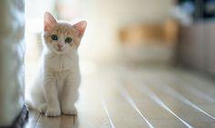 Seu gato provavelmente pensa que você é um gato, mas muito maior.
