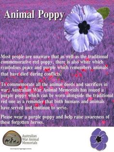 Lest We Forget. The animals who served beside our men. Remembrance Day Poems, Remembrance Day Activities, Remembrance Poppy, Red And Purple Poppy, Purple Poppies, Anzac Day Australia, Lest We Forget Anzac, Cursive Letters Fancy, Pictures Of Poppy Flowers