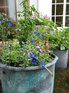 copper-container-plants-sarah-raven-mix-daisy-garnett-garden-london-gardenista