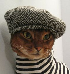 french cat with casquette. where is his baguette?