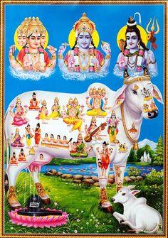 Kanchi Paramacharya on Protecting the Cow