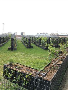 Babylon Garden - Her Crochet Agriculture Verticale, Farm Layout, Backyard Renovations, Vertical Farming, Farm Gardens, Fence Design, Urban Farming, Aquaponics, Garden Planning