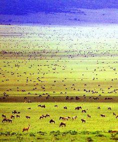 Serengeti National Park, Tanzania. UNESCO World Heritage Site.