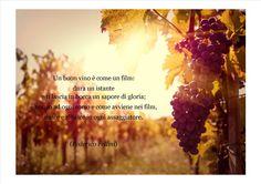 #citazione #cit #vino #wine #federico #fellini #vite #vitigno #uvaggio