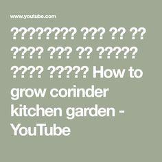 कर्मियों मैं घर पर बिना बीज के धनिया कैसे उगाये How to grow corinder  kitchen garden - YouTube
