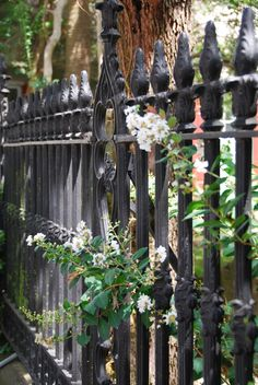 Beautiful Black Iron Garden Fences