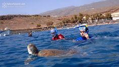 Snorkelling with turtles Tenerife  ✈✈✈ Here is your chance to win a Free International Roundtrip Ticket to Tenerife, Spain from anywhere in the world **GIVEAWAY** ✈✈✈ https://thedecisionmoment.com/free-roundtrip-tickets-to-europe-spain-tenerife/
