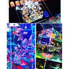 【yumia.exo】さんのInstagramをピンしています。 《おーさか!堂島! 『アートアクアリウム』にいってきました。 ずーと、ずーと、行ってみたかった。金魚を見る祭典?(笑)😂😂何か違うな とにかく、金魚がすごく、きれーなぶん。 きれーかった!きょーが最終日やったからか、すんごい、大行列で 人気なんだと、改めて実感…。 本間に、綺麗や~❤の一言でした。 きょーは。 お仕事おやすみで、いきたかったとこ、食べたかったこと、全部叶えてくれて ありがとぉぉ。帰りたくなかったです❤ 一杯食べたし 他にも話したかった、聞いてもらいたかったことあるけど、また、ちびちびはなそーっと( *´艸`) 沢山、笑って沢山、幸せな1日でした。…
