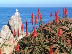 Cottage vacation rental in Pacific Grove, CA, USA from VRBO.com! #vacation #rental #travel #vrbo
