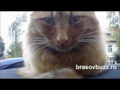 Brasov. Like a boss!