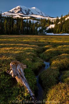 Mount Adams Meadow - © David M. Cobb Photography