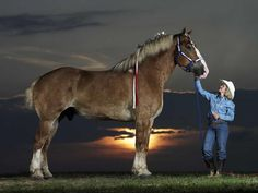 Radar, a Belgian draft horse, stands at 19.3 1/2 hands and is currently listed as one of the tallest living horses in the Guinness Book of World Records.