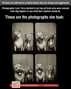 What happens when you put two pit bulls in a photo booth…poor little guys get a bad wrap