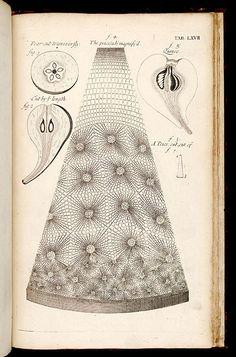 Grew, Nehemiah, 1641-1712. The anatomy of plants - Biodiversity Heritage Library