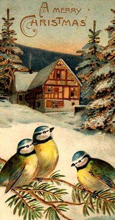 Divided Back Postcard A Merry Christmas Birds Old Time Christmas, Christmas Bird, Old Fashioned Christmas, Christmas Scenes, Retro Christmas, Christmas Greetings, Christmas Postcards, Primitive Christmas, Country Christmas