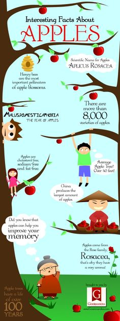 apple trivia | Interesting Facts About Apples | LOVE INFOGRAPHICS
