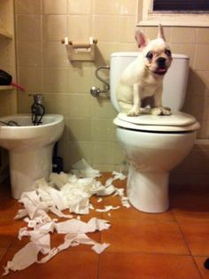 haha...um precisely why my bathroom trashcan is off the floor. Brina loves tearing up toilet paper/tissue paper!