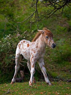 First you start with an Appaloosa baby and then, I'm just kidding!!! He's sooooo cute!