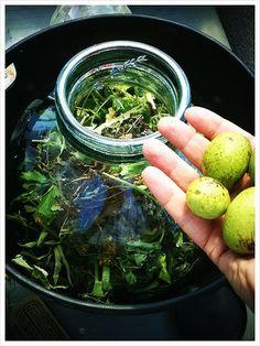Fent la #ratafia ,.. can sushi, desenes d'herbes diferents, i #nous