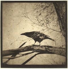 Photogravure with chine colle-Karena Goldfinch