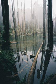Flooded wood