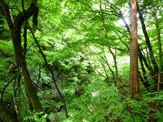 Yamada-Onsen(Terme) Takayama-mura Nagano Japan